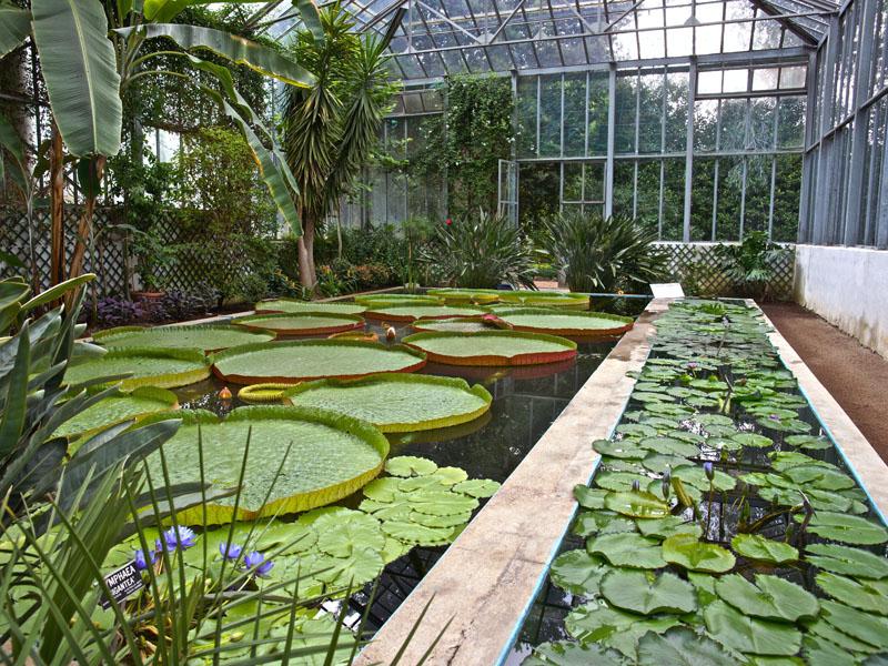 I giardini di villa taranto serre aiuole floreali e gli for Giardini immagini